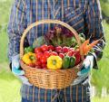 День поля «Волгоградский овощевод»