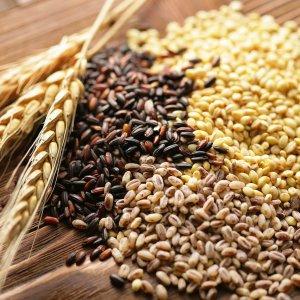 Семена зерновых культур