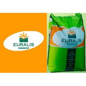 Кукуруза Евралис