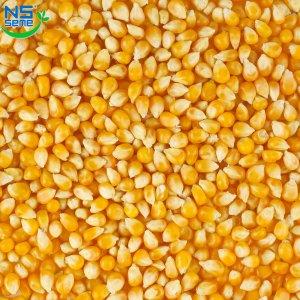 Кукуруза (Сербская селекция)