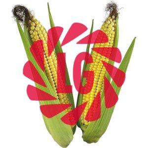 Кукуруза Limagrain