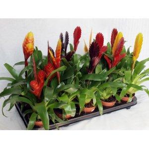 Растения комнатные, цветы