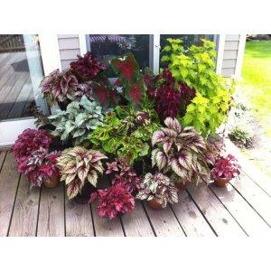 Декоративно-лисьвенные растения