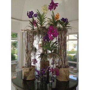 Ванда-королева орхидей