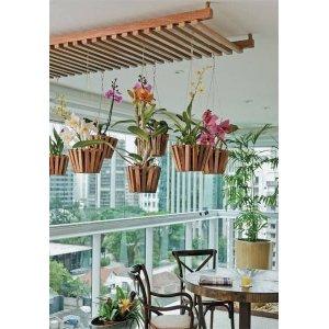 Экзотические разновидности орхидей