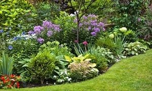 Многолетние садовые растения