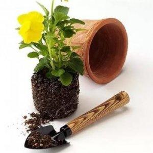 Все для домашних растений
