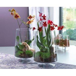 Стеклянные кашпо для орхидей