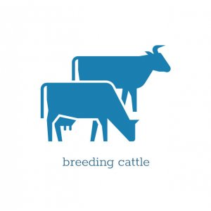 Breeding cattle of the Simmental and Holstein breeds