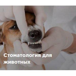 Стоматология для животных
