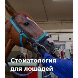 Стоматология для лошадей