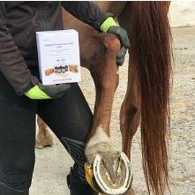 Перечень вопросов по ортопедии лошадей